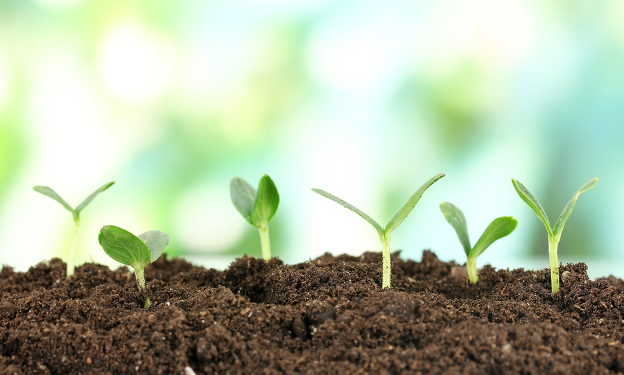 bigstock-Green-seedling-growing